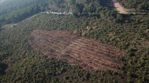 Aydos Ormanı'ndaki yangınla ilgili keşif yapıldı