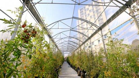 İstanbul'da çatılarda tarım yapılabilecek