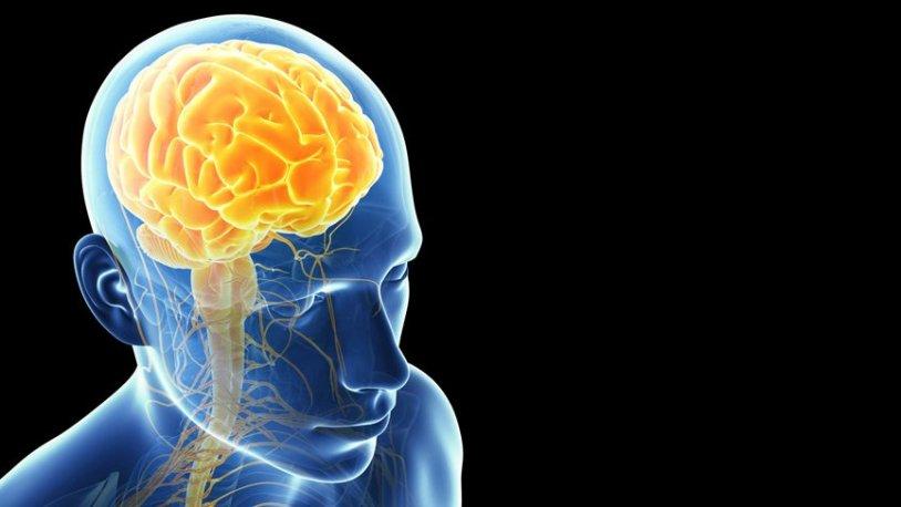 Beyinleri toksinden arındıran en doğal yöntem - Gerçek Gündem